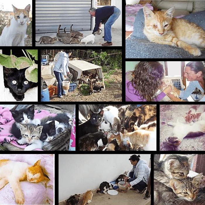 collage van Skiathos asiel fotoos